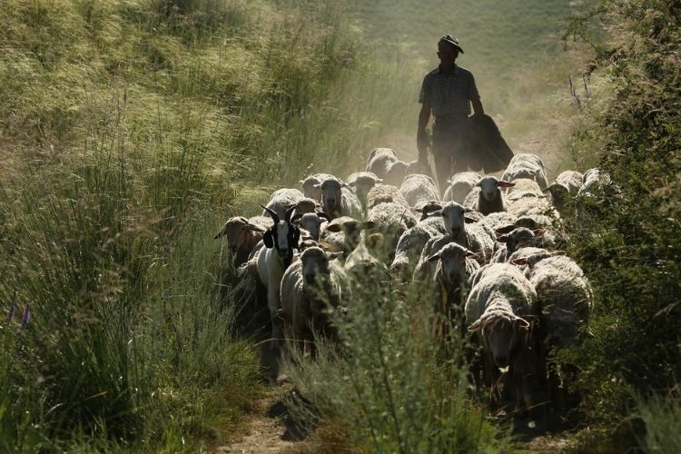 8 Ways to Increase the Profit of Sheep Farmer